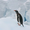 Antarctica : 17 galleries with 1754 photos