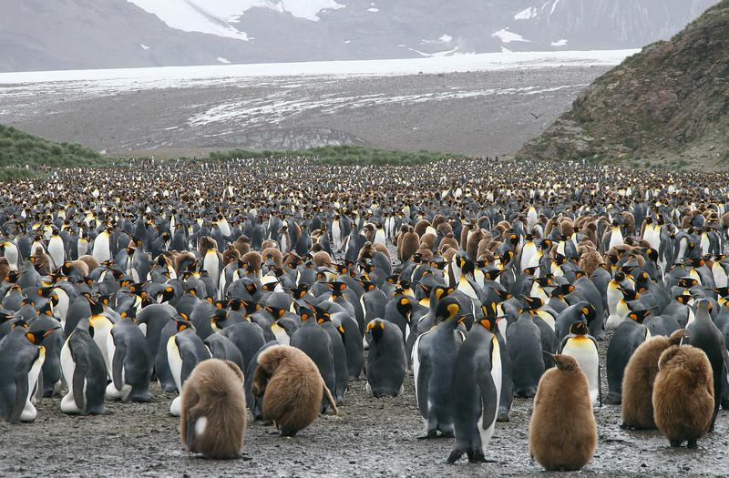 Falklands, South Georgia, Peninsula - 2007