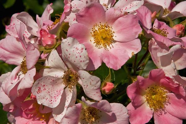Green Spring Gardens <br> (Sep 2007)